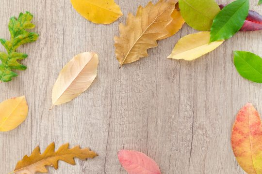 Colorful leaves on wood board